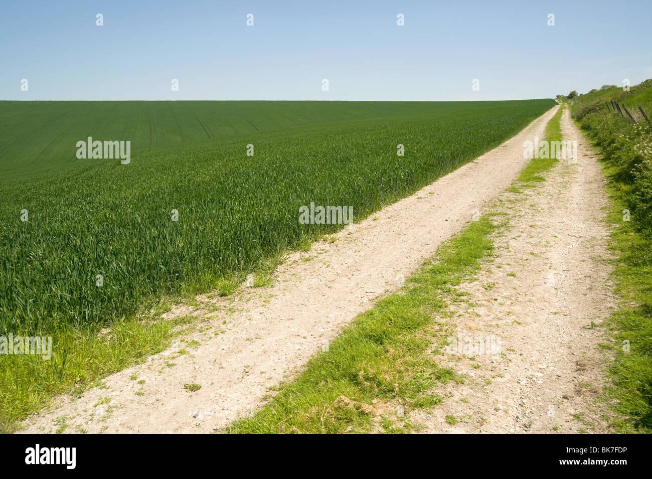 Verfolgen Sie in einem Feld Stockbild