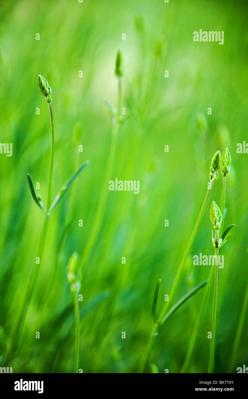 grünen Rasen Feld Hintergrund mit selektiven Fokus Stockfoto