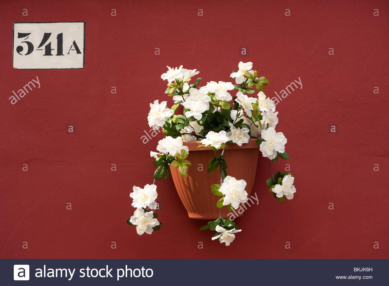 Blumentopf auf Wand des bunten Haus im Dorf von Burano in der Nähe von Venedig in Italien Stockbild