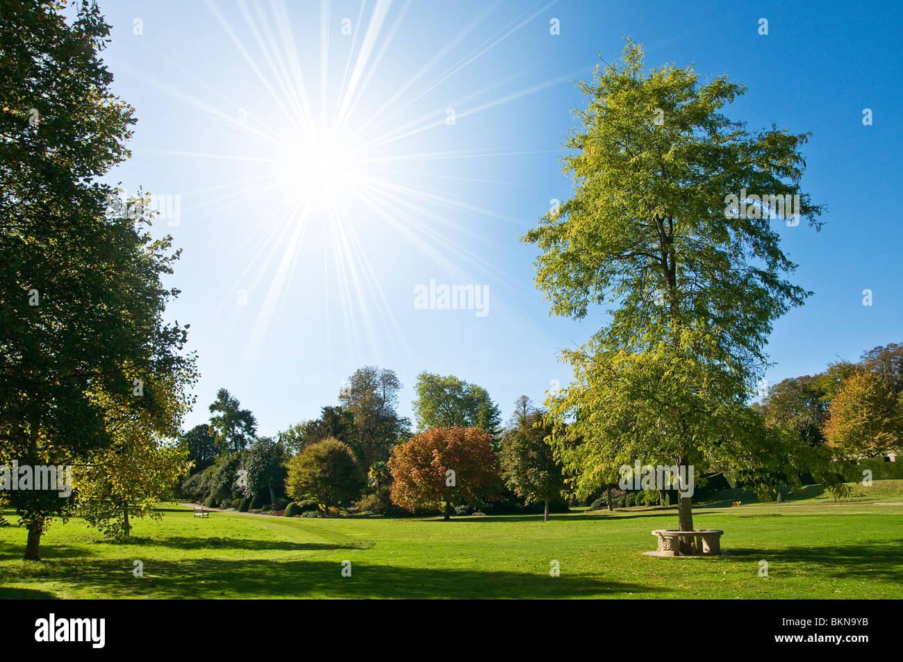 Sommer Park Stockbild