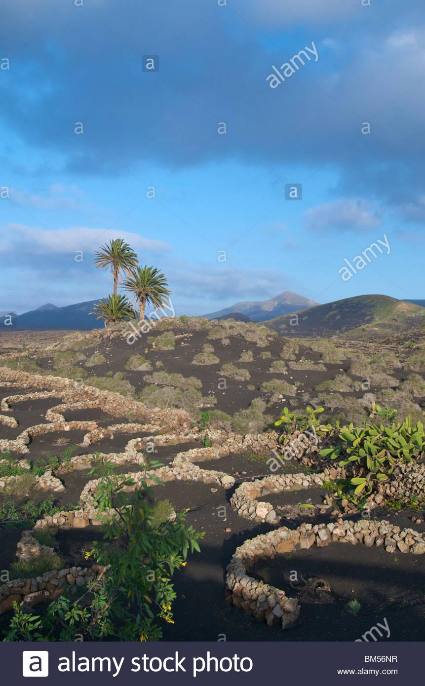 Weinberg in Yaiza Lanzarote-Kanarische Inseln-Spanien Stockbild