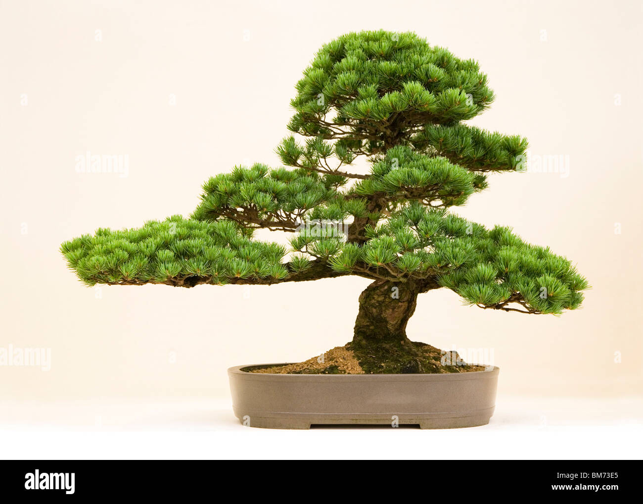 tree pruned stockfotos tree pruned bilder alamy. Black Bedroom Furniture Sets. Home Design Ideas