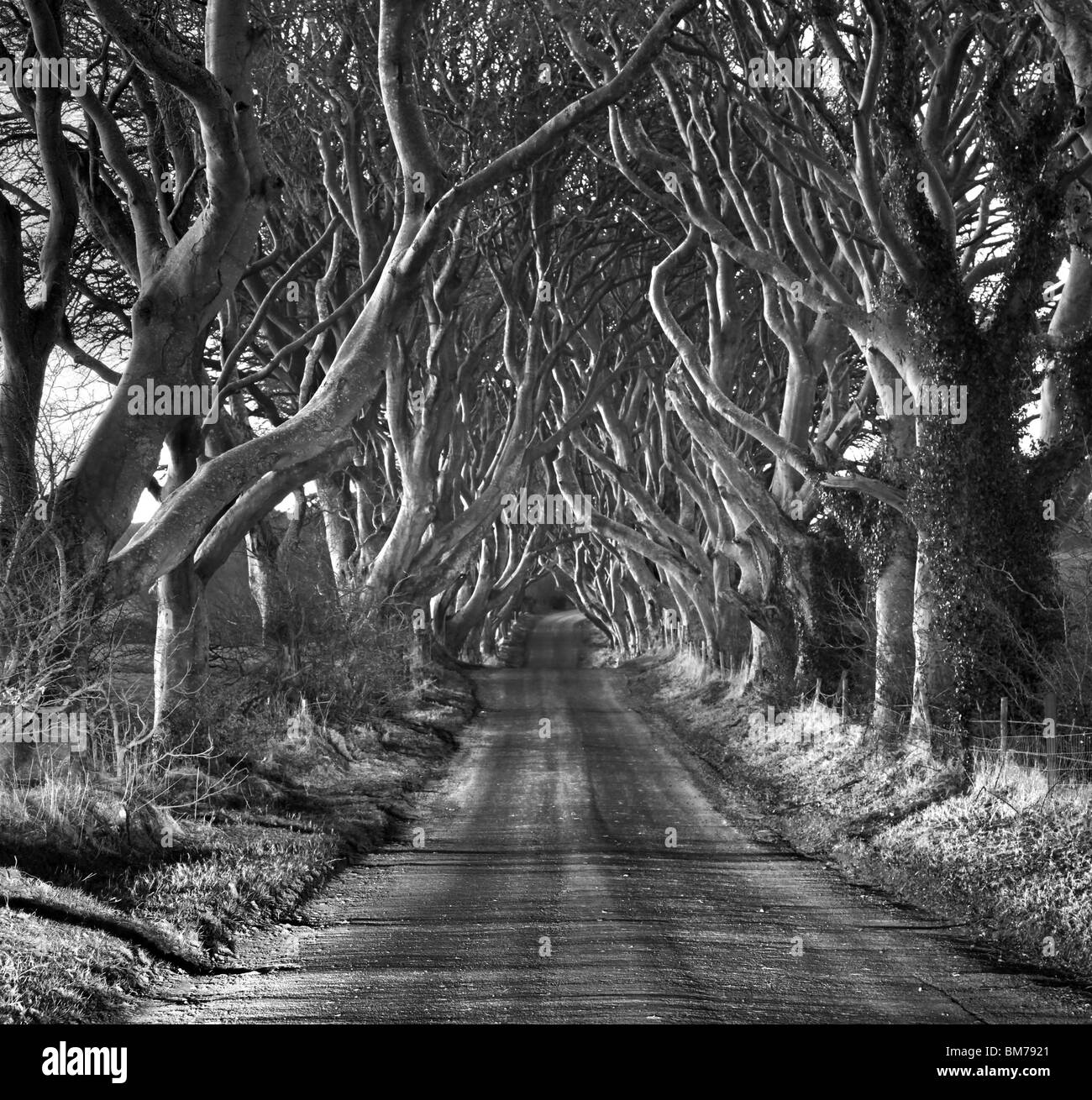 Die Dunkelheit Hecken, Armoy, Co. Antrim. Nordirland. Stockbild