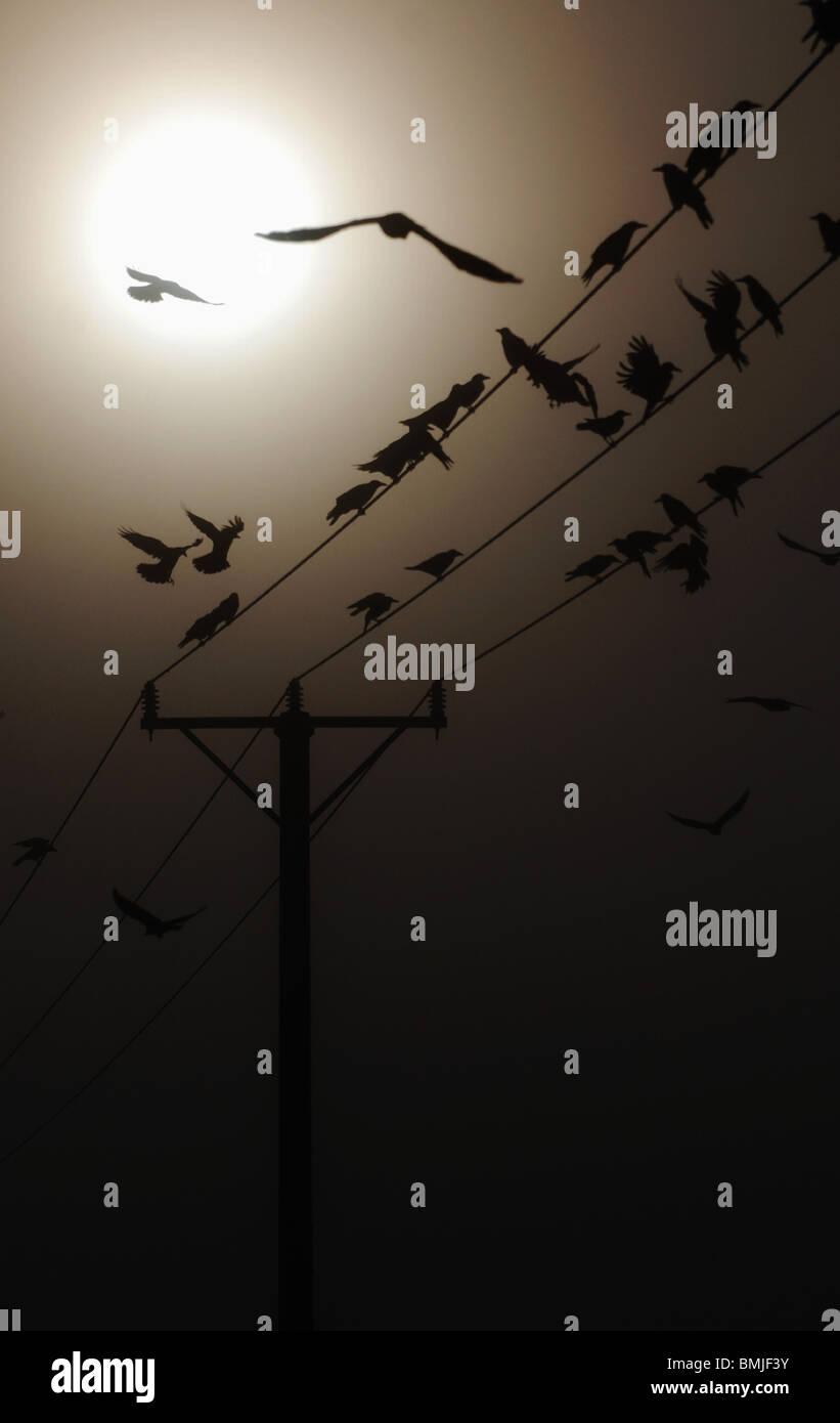 Vögel auf elektrische Kabel Stockbild