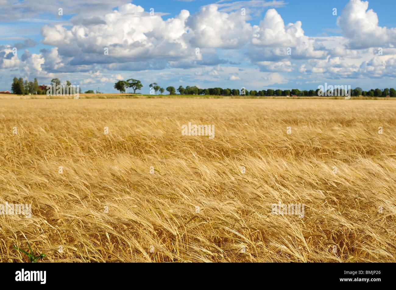Skandinavien, Schweden, Ostergotland, Blick auf Feld Stockbild