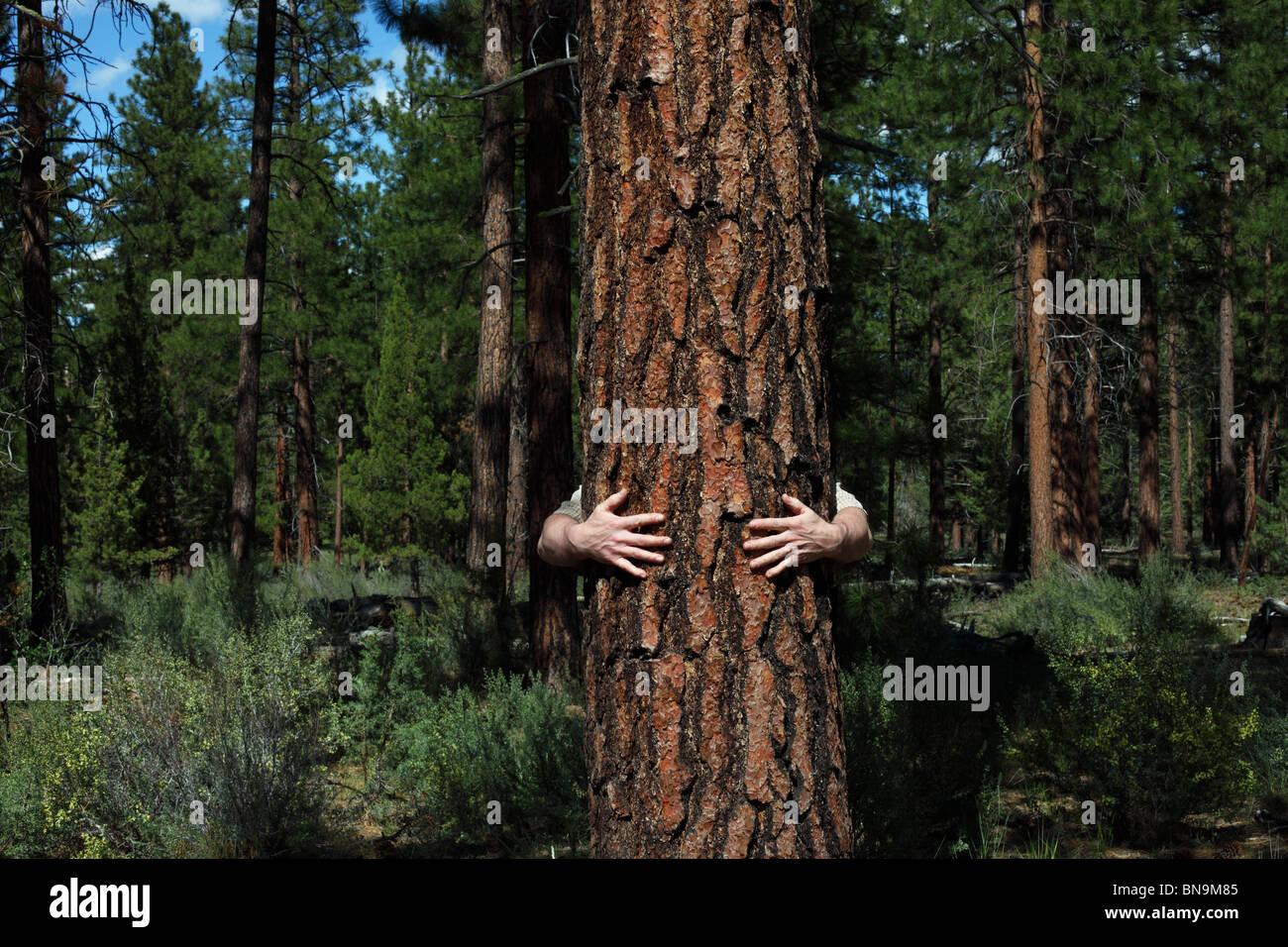 Arme Mann umarmt Baum im Wald Stockbild