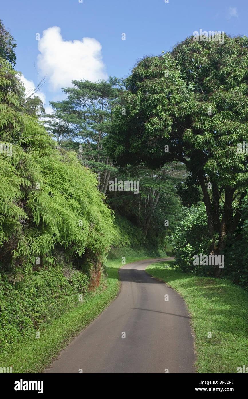 Kauai, Hawaii, Vereinigte Staaten von Amerika; Einspurig kurvige Straße Durchläufe durch sattes Grün Stockbild