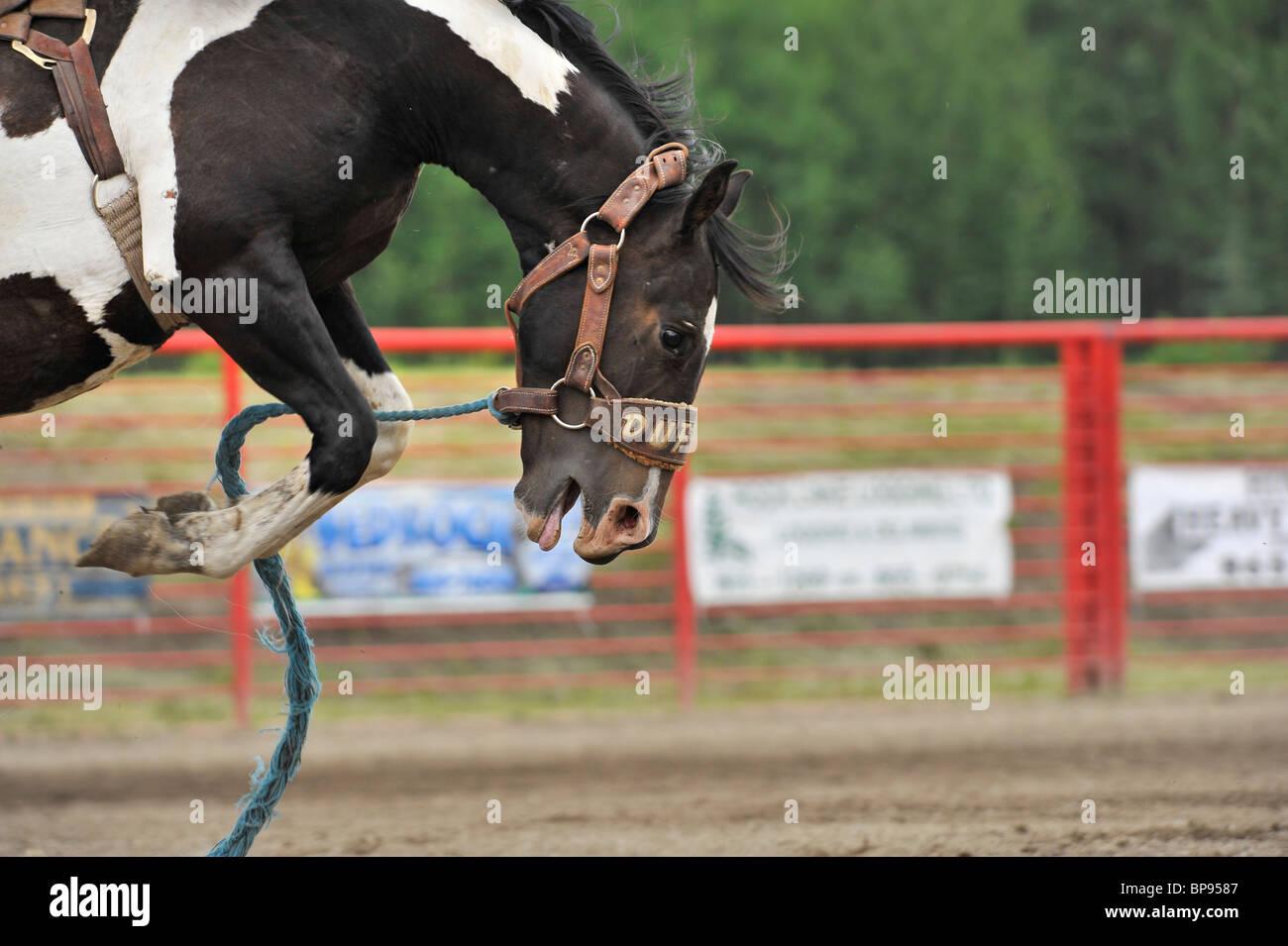 Eine Nahaufnahme von einem bucking Horse Stockbild