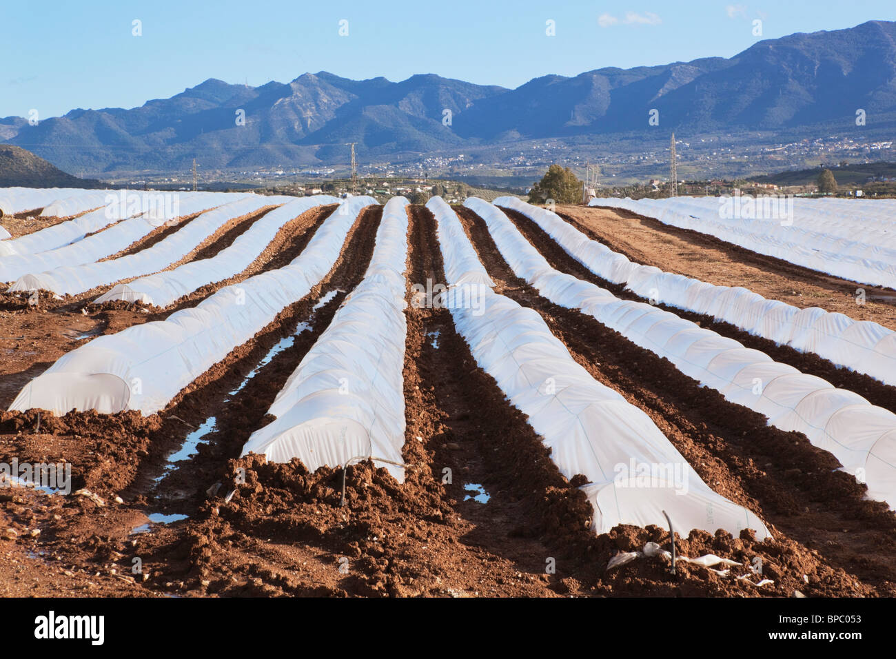 plastic farming crops tunnels stockfotos plastic farming crops tunnels bilder alamy. Black Bedroom Furniture Sets. Home Design Ideas