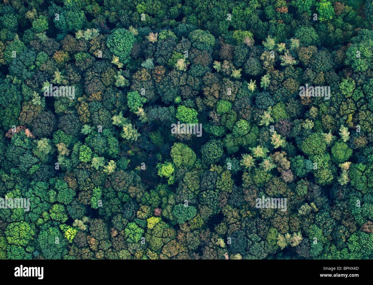 Luftaufnahme der Wald(Holz) gemischte Laubwälder im Herbst Norfolk UK Stockbild