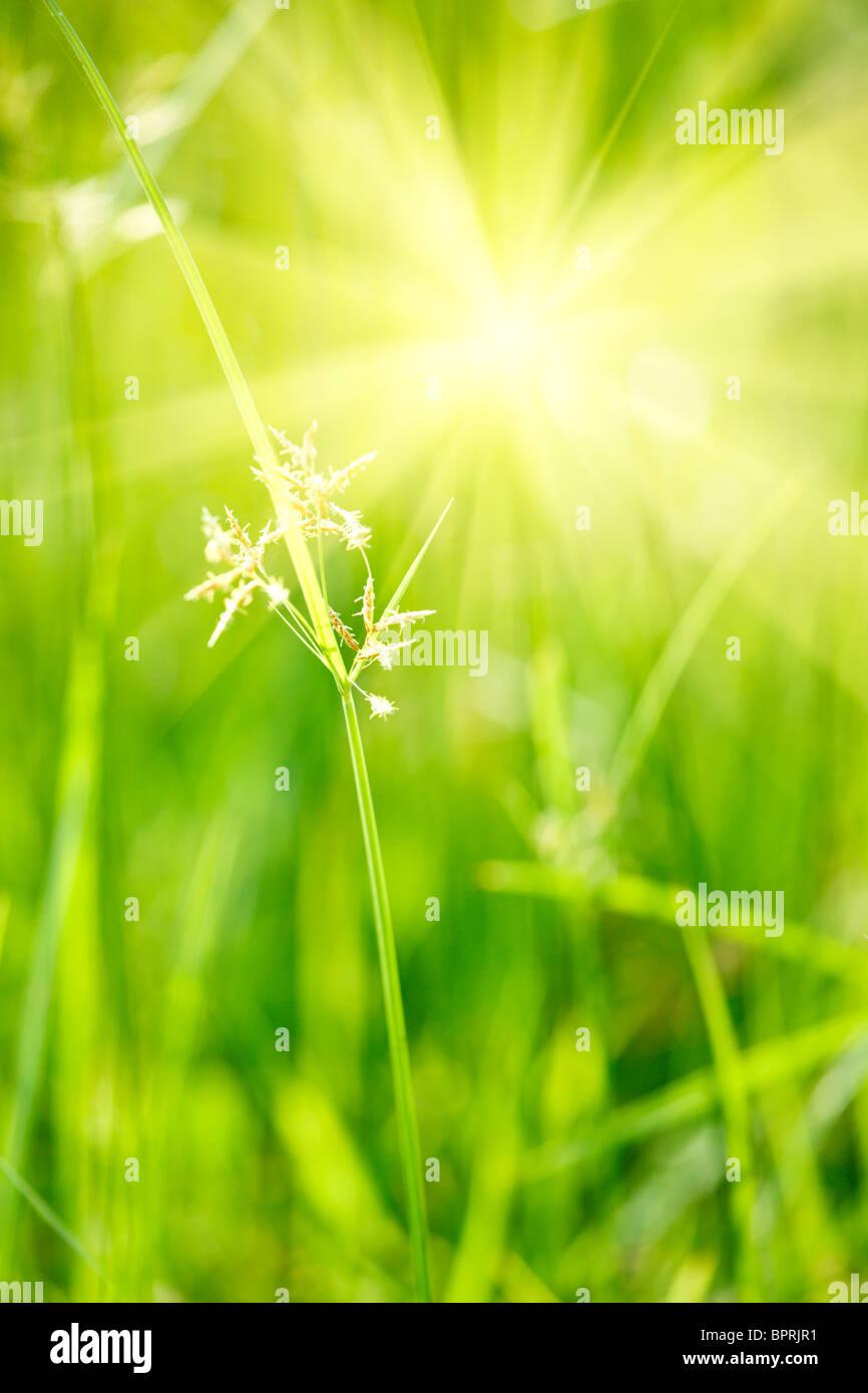 Grünen Rasen - geringe Schärfentiefe Stockbild