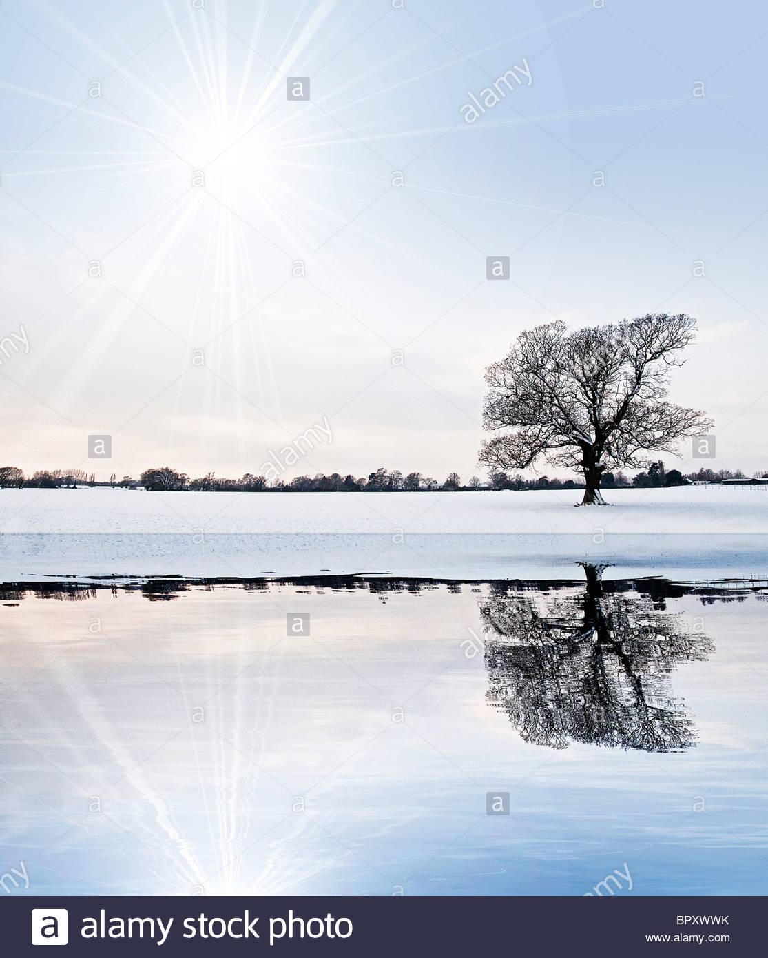 Schnee Baum Landschaft Reflexion Stockbild