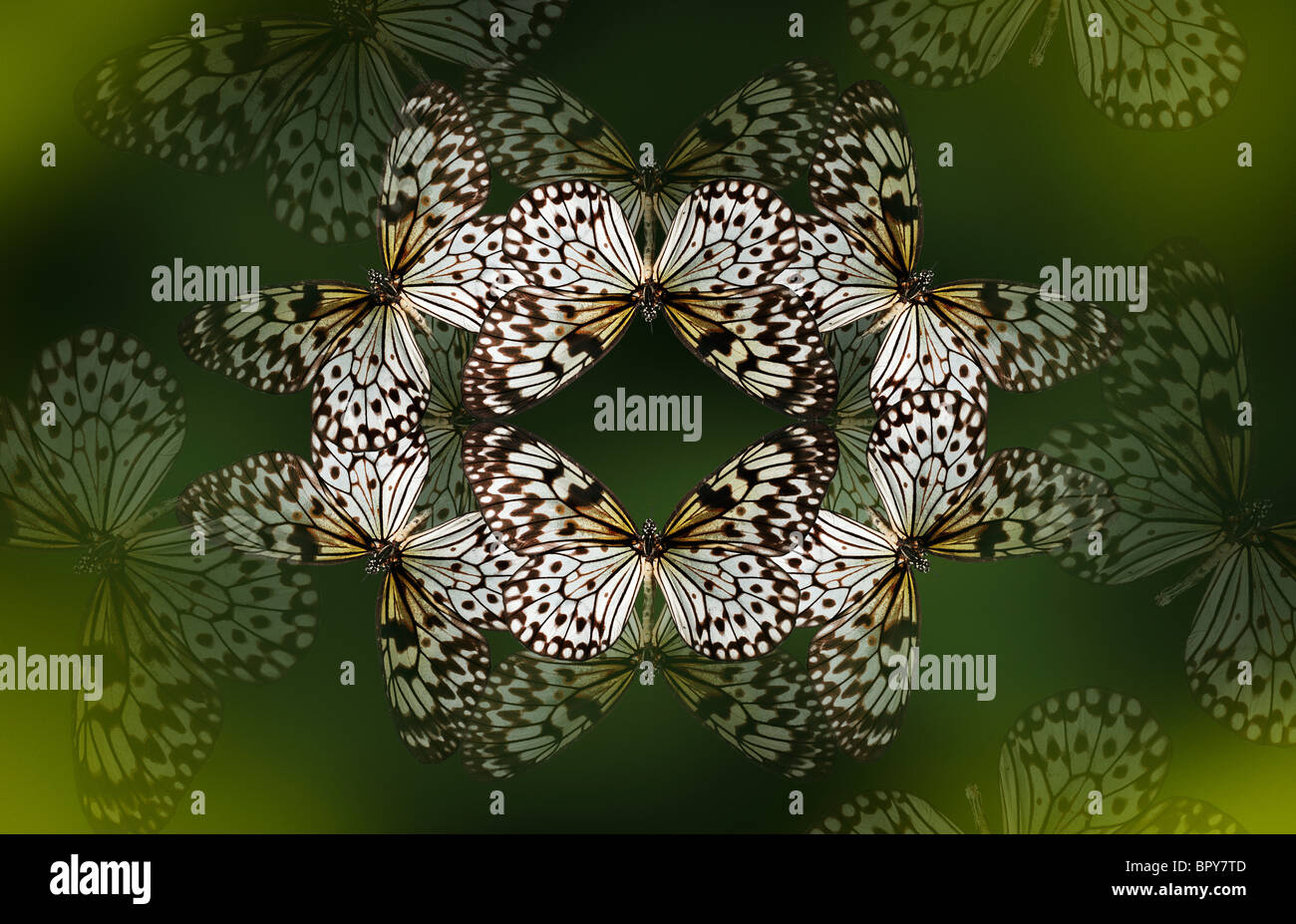 Baum Nymphe Schmetterling machen ein schönes Kaleidoskop wie Muster auf einem tiefen Waldgrün Hintergrund. Stockbild