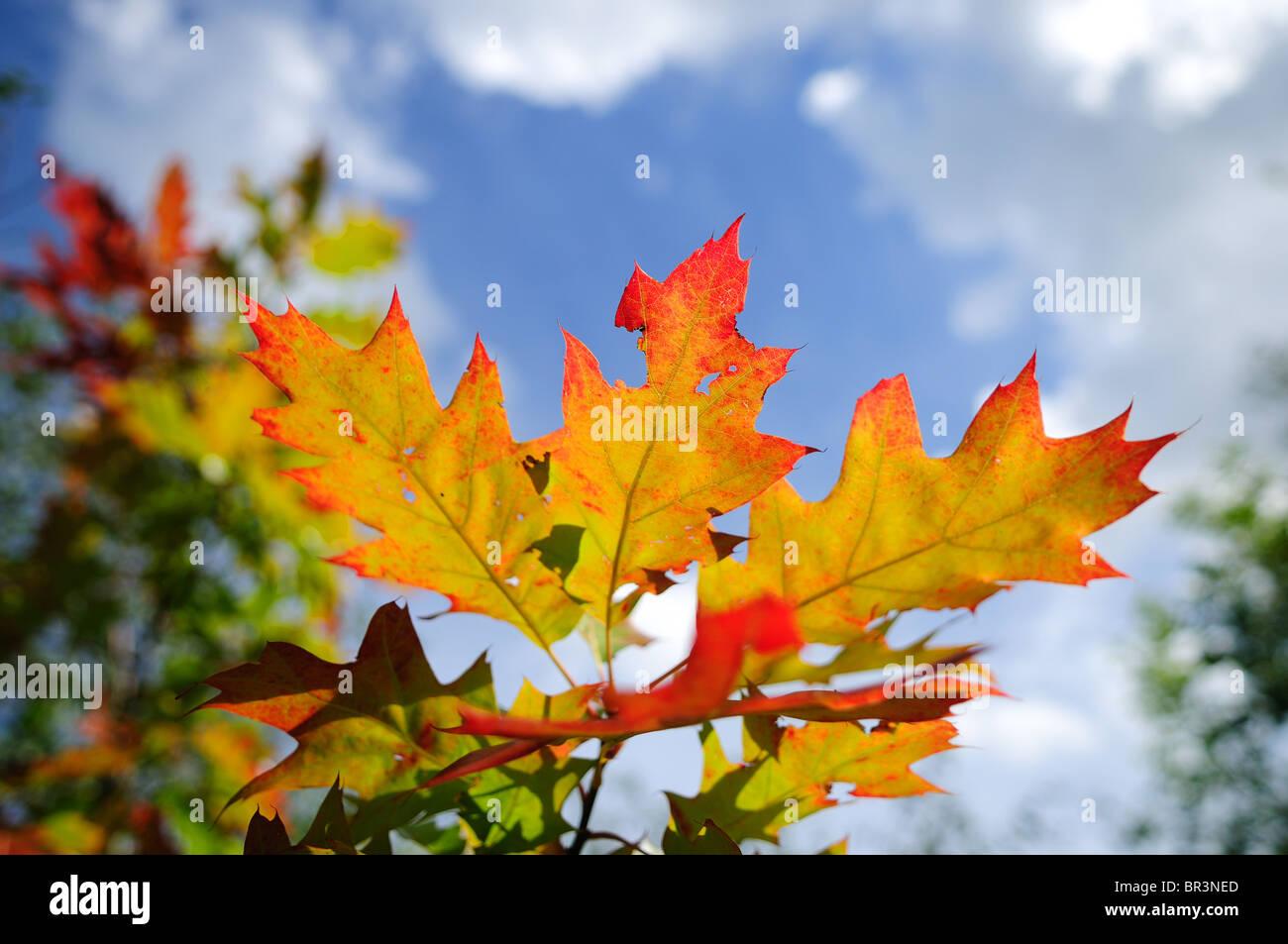 Herbst Blätter. Stockbild