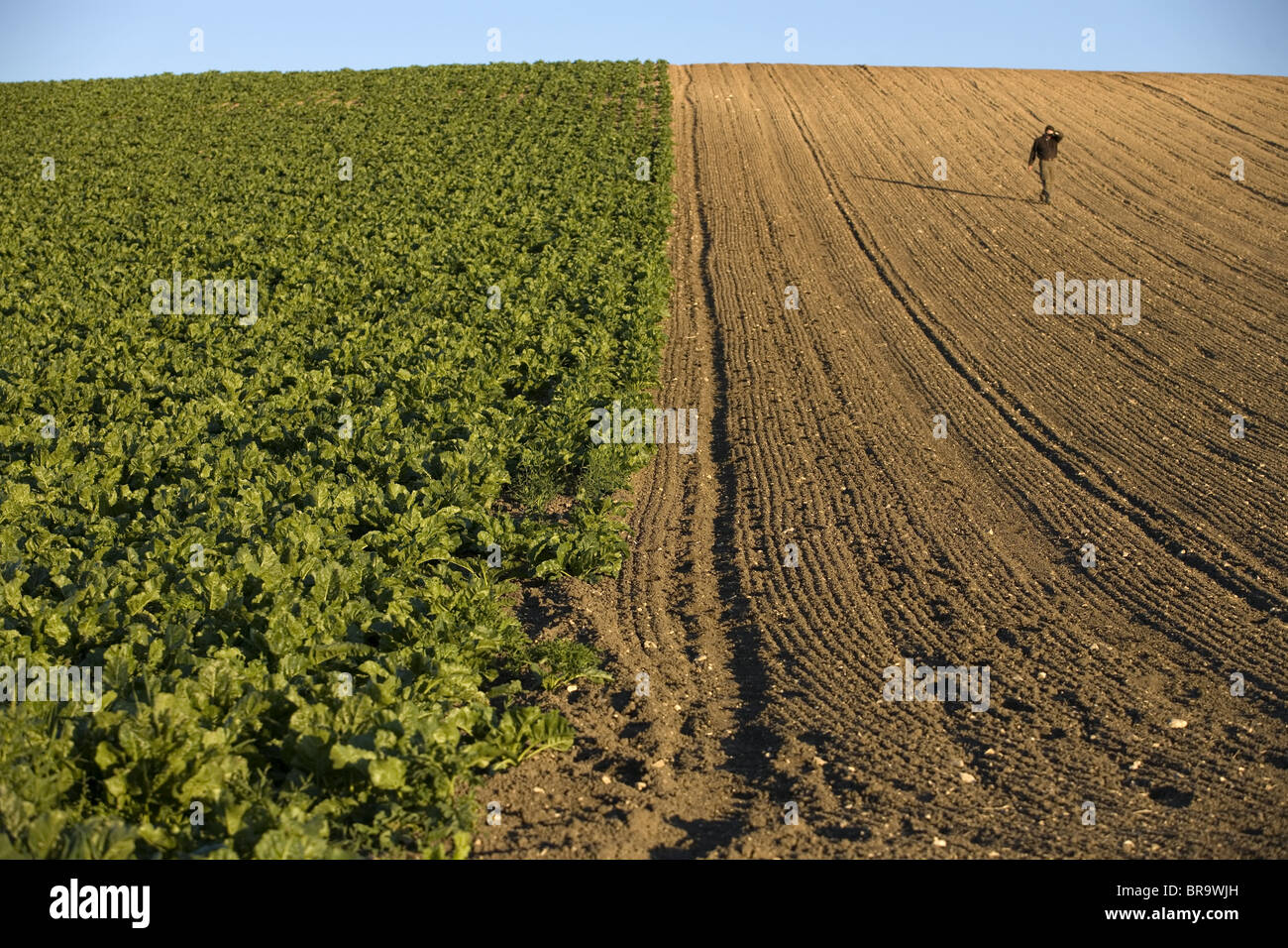 Felder in der Finca Las Carboneras oder Stockbild
