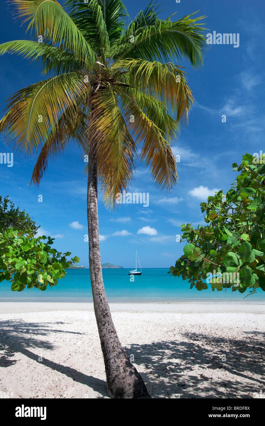 Strand von Megans Bay mit Boot und Palm-Baum. St. Thomas. Jungferninseln (US). Stockbild
