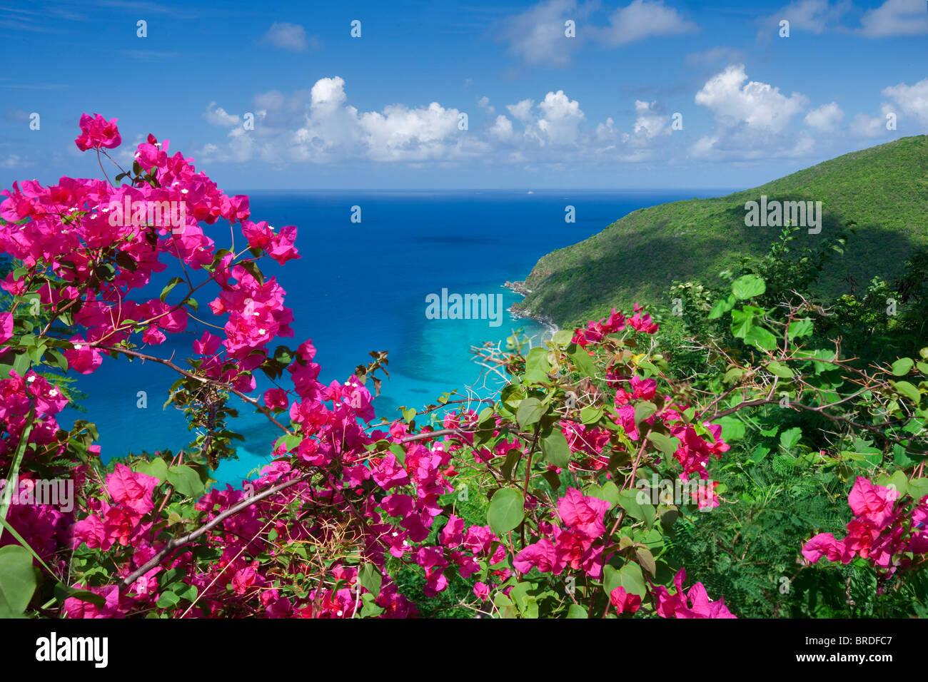 Grillgelegenheiten Blumen und die Küste auf St. Thomas. Jungferninseln (US) Stockbild