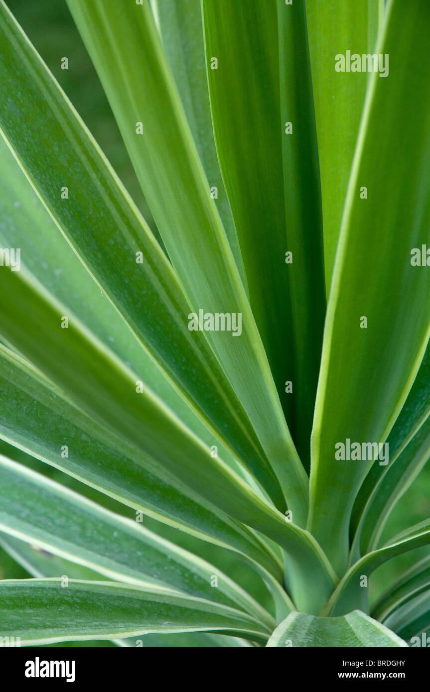 Grünpflanze Detail Hintergrund, selektiven Fokus Stockbild