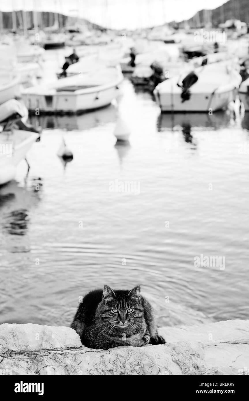 Katze in der Nähe von Meerwasser Stockbild