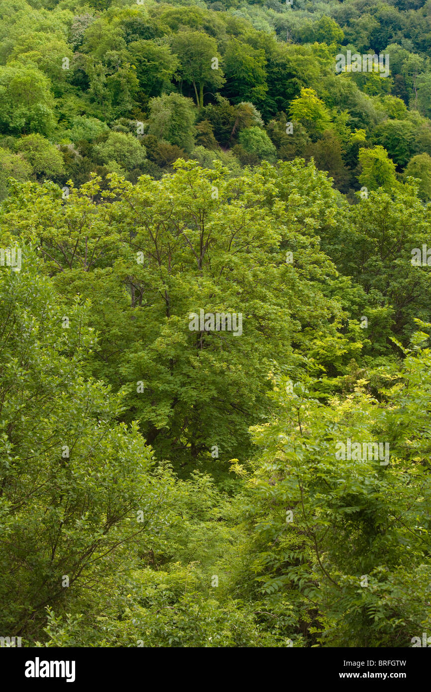 Auf der Suche nach unten auf einer Fläche von Wald in Hampshire UK. Stockbild