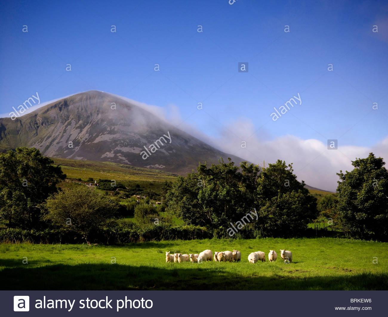 Croagh Patrick Berg in County Mayo Stockbild