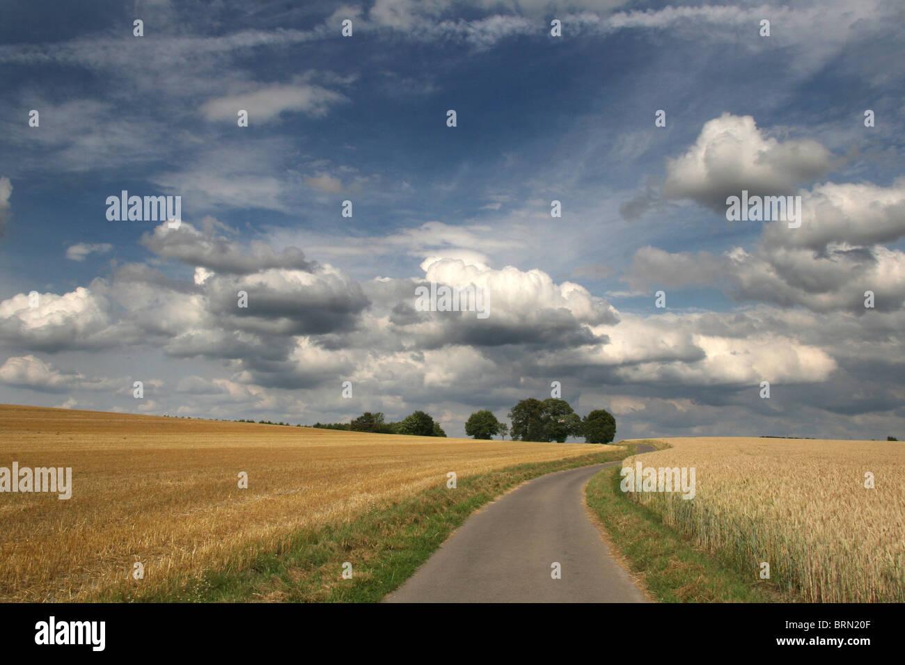 Getreidefeldern, auf der einen Seite der Straße geerntet, die anderen noch stehen. Nordrhein Westfalen, Deutschland. Stockbild