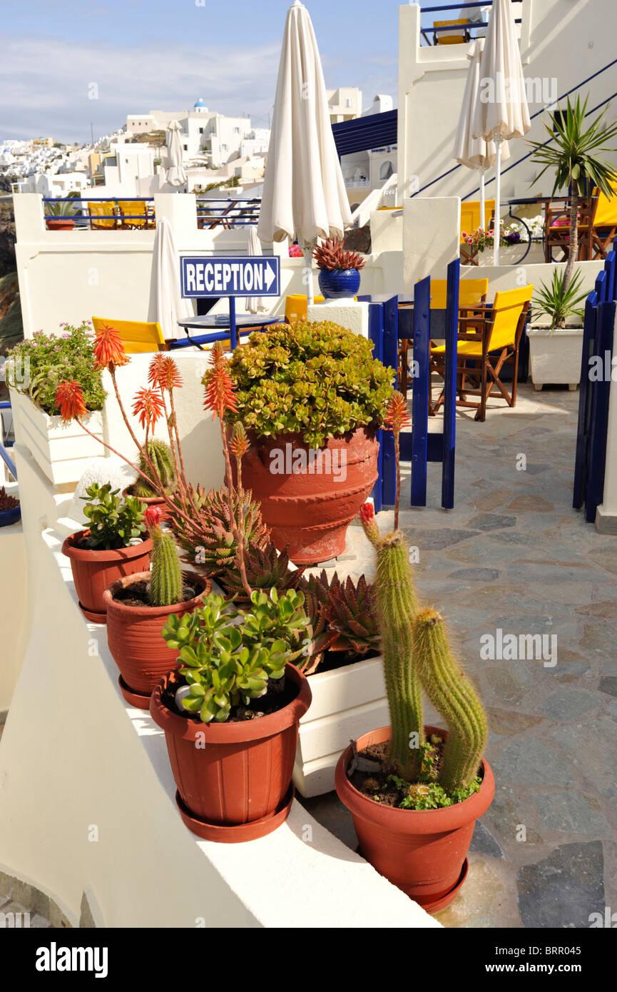 eine gruppe von pflanzen und kakteen auf der terrasse eines hauses auf der griechischen insel. Black Bedroom Furniture Sets. Home Design Ideas