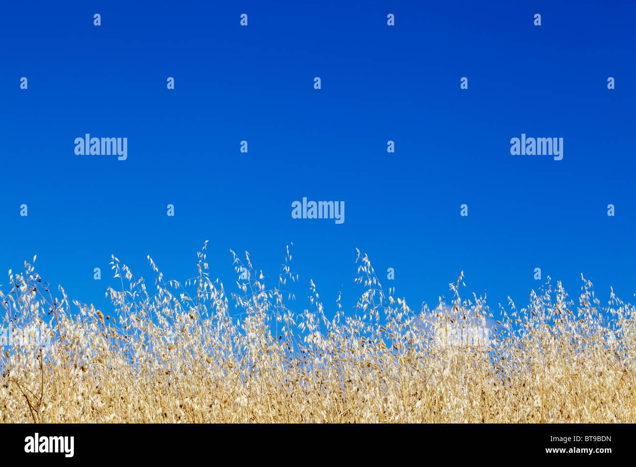 Sommertag - Toskana, Italien Stockbild
