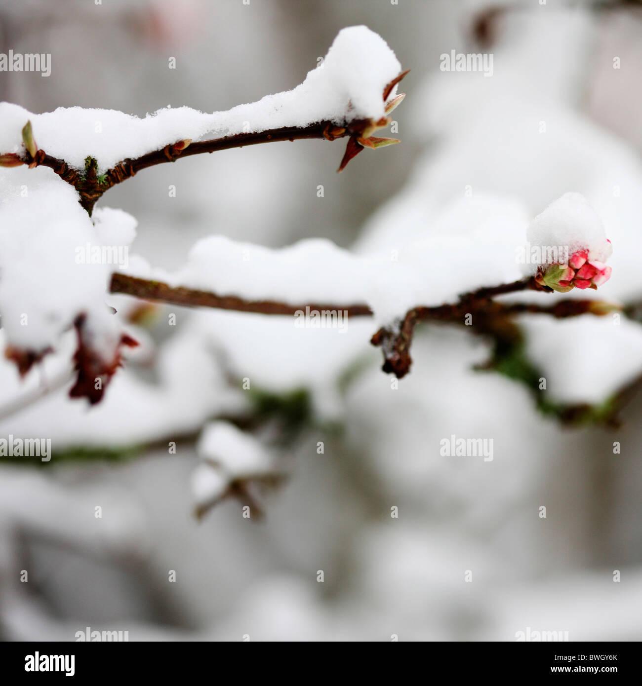 Blüte Knospe im Winterschnee - Fine Art-Fotografie, Jane Ann Butler Fotografie JABP956 RIGHTS MANAGED beschichtet Stockbild
