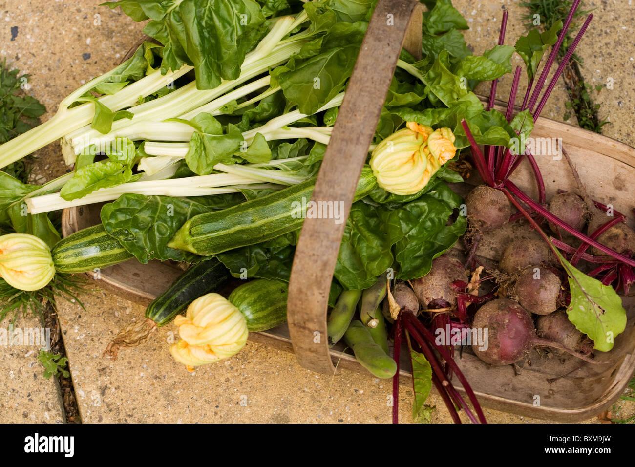 Trug der Frischwaren, Zucchini, rote Beete, Spinat, Mangold und Saubohnen Stockbild