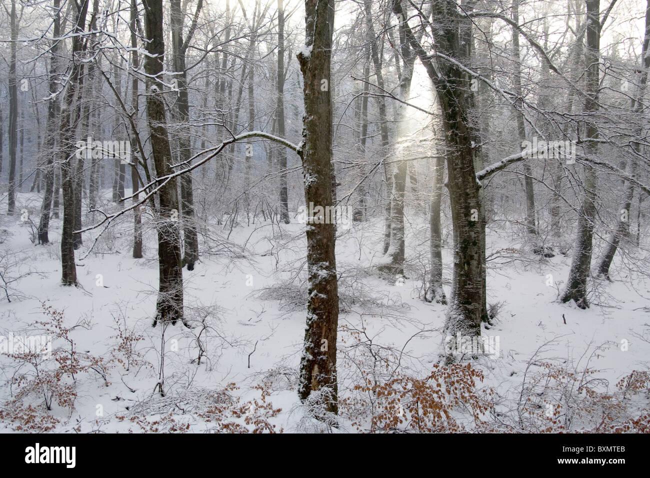 Dieses Bild zeigt Bäume im Schnee, in Germia Park, einem öffentlichen Bereich außerhalb Prishtina Stockbild
