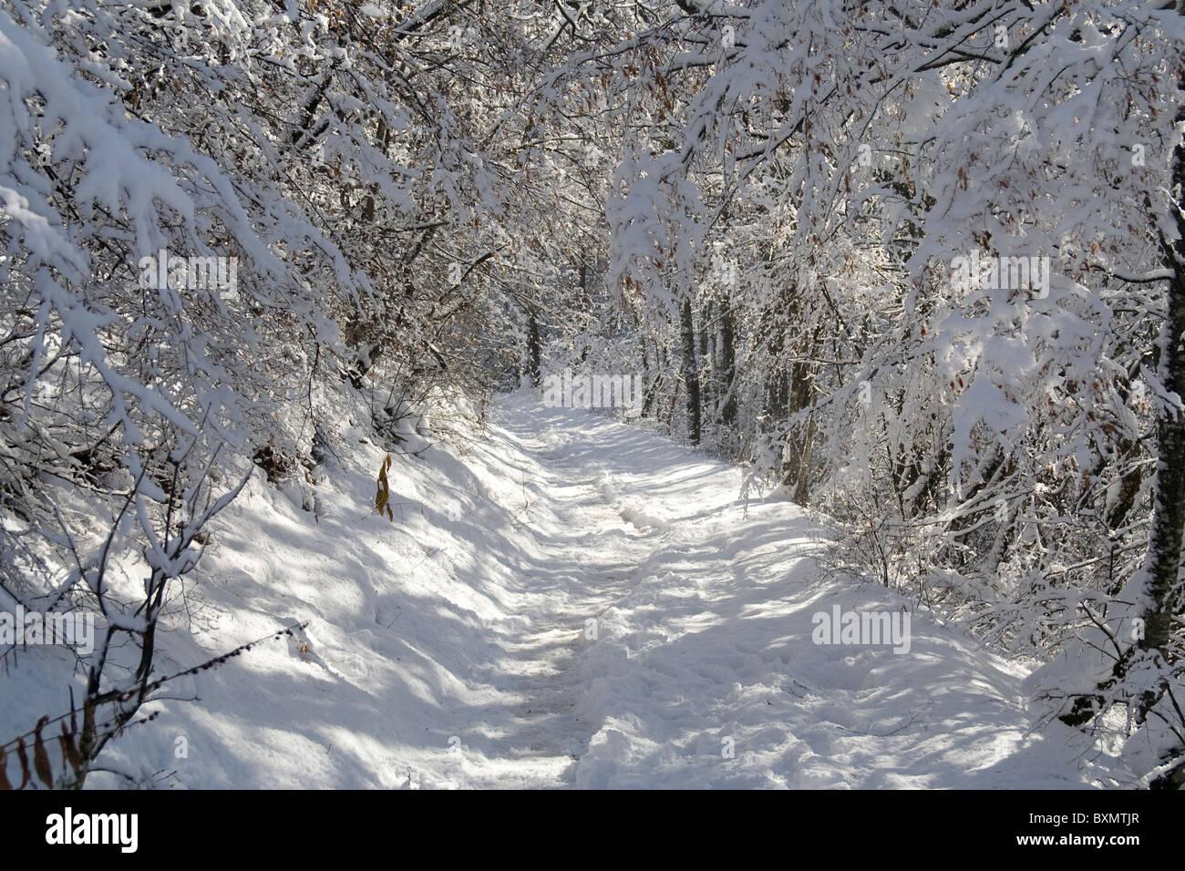 Dieses Bild zeigt Bäume im Schnee in Germia Park, einem öffentlichen Bereich außerhalb Prishtina Stockbild