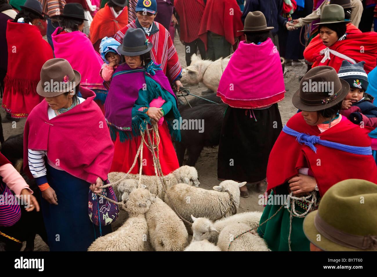 Tiermarkt, Guamote, nr Riobamba, Hochland, Ecuador Stockbild