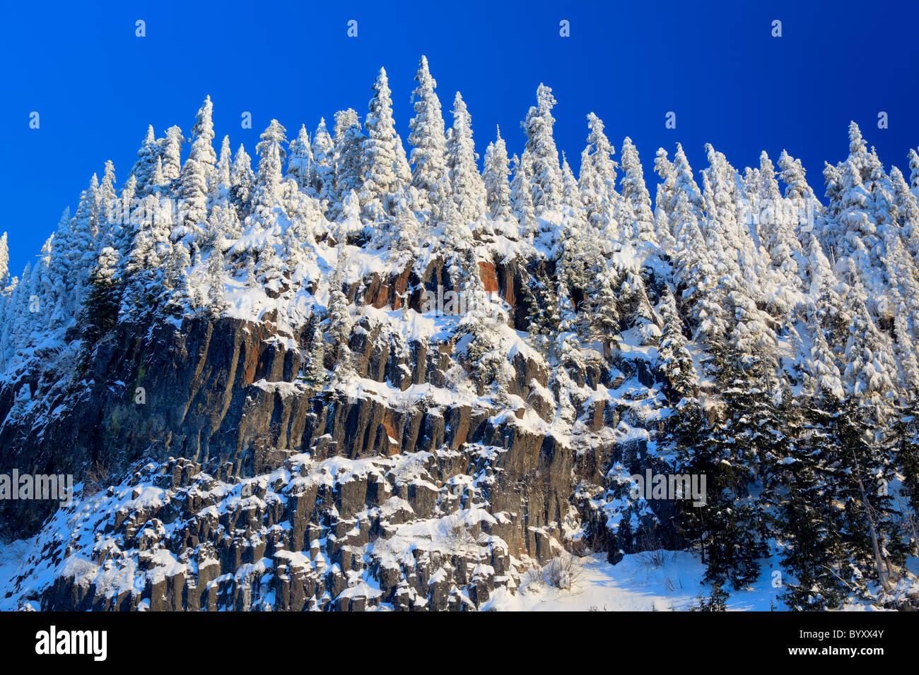 Bäume in Mount Rainier Nationalpark mitten im Winter gefroren Stockbild