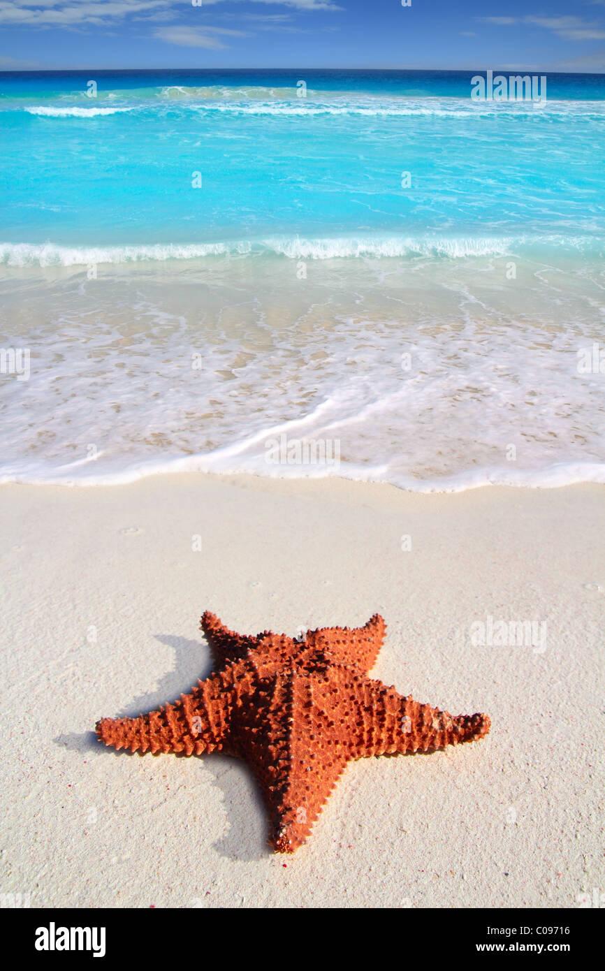 wunderschönen karibischen Seestern tropischen türkisfarbenen Sandstrand Stockbild