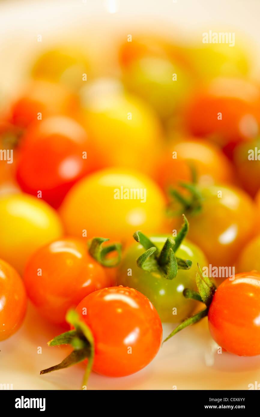 Juwelen: bunte Cherry Tomaten frisch gepflückt aus dem Garten hinter dem Haus Bio Stockbild