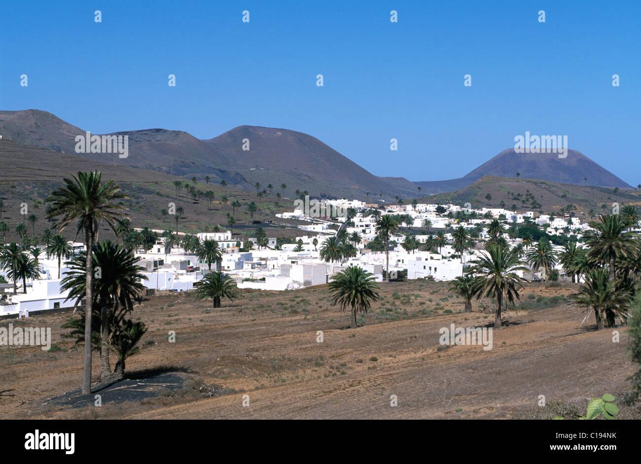 Palm-Baum Oase Haria, Lanzarote, Kanarische Inseln, Spanien, Europa Stockbild