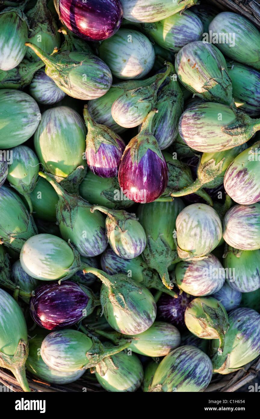 Indisches Gemüse. Auberginen/Melanzani oder Aubergine. Andhra Pradesh, Indien. Ernährung Stockbild