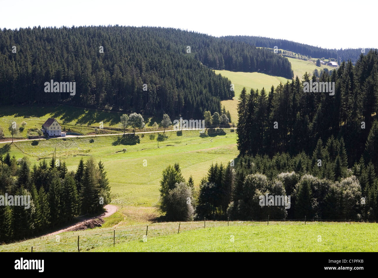 Deutschland, Bayern, Titisee, Wald und Straße Stockbild