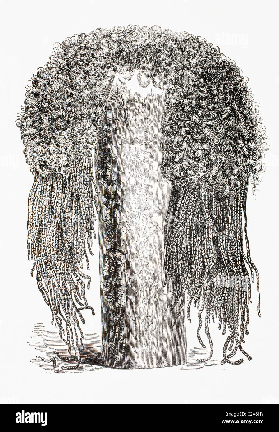 Eine alte ägyptische Perücke. Stockbild