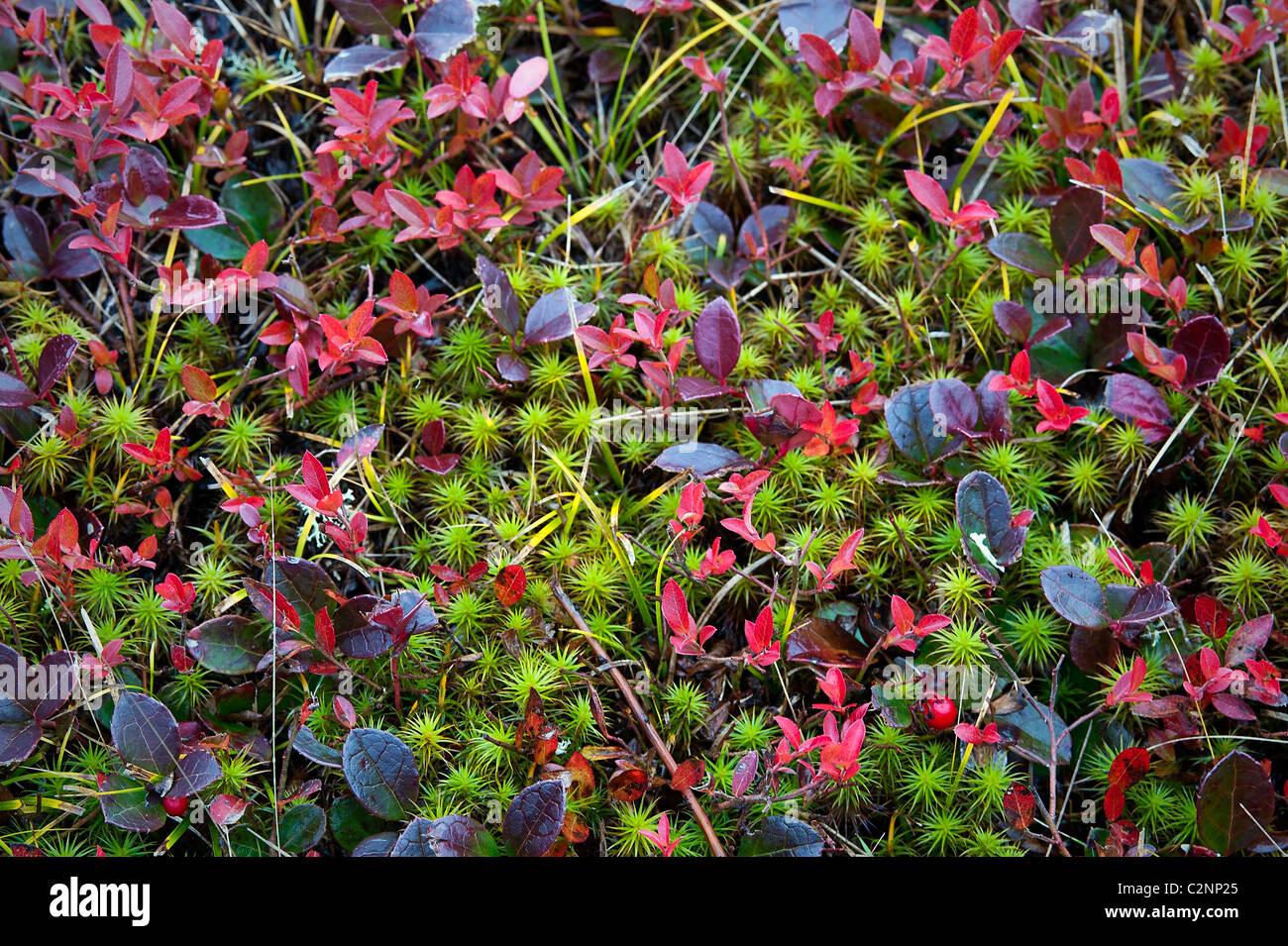 bunte bodendecker herbstpflanzen stockfoto bild 36128349. Black Bedroom Furniture Sets. Home Design Ideas