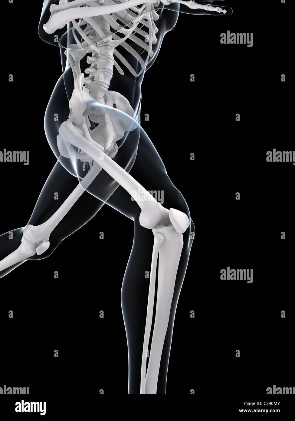 Skelett ausgeführt Stockfoto