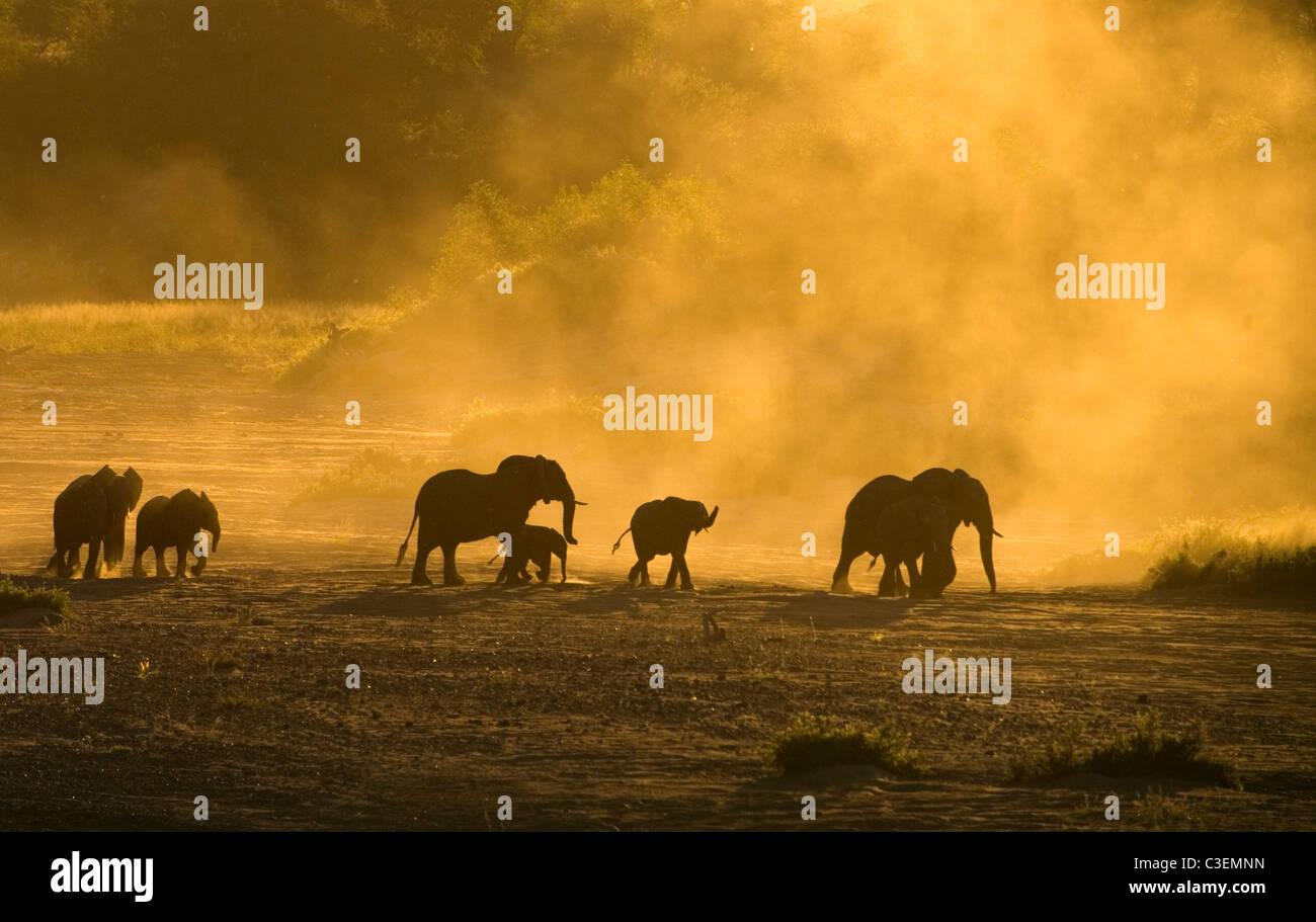 Erschwingliche hervorragende Tierbeobachtungen im Krüger National Park, Südafrika. Herde von Elefanten Stockbild