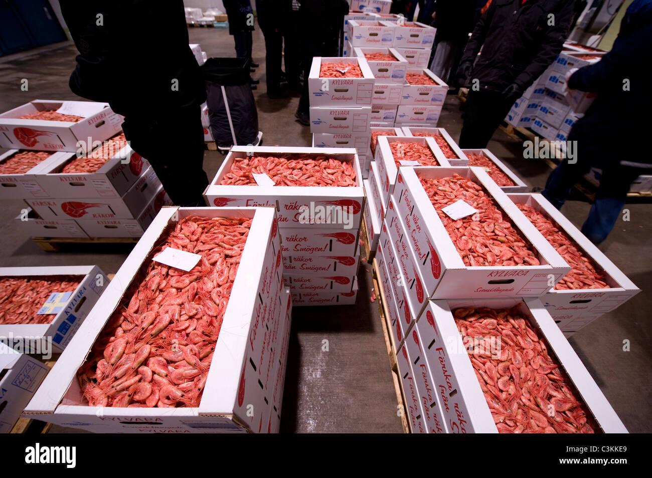 Frische Garnelen in Kästchen am Fischmarkt Stockbild