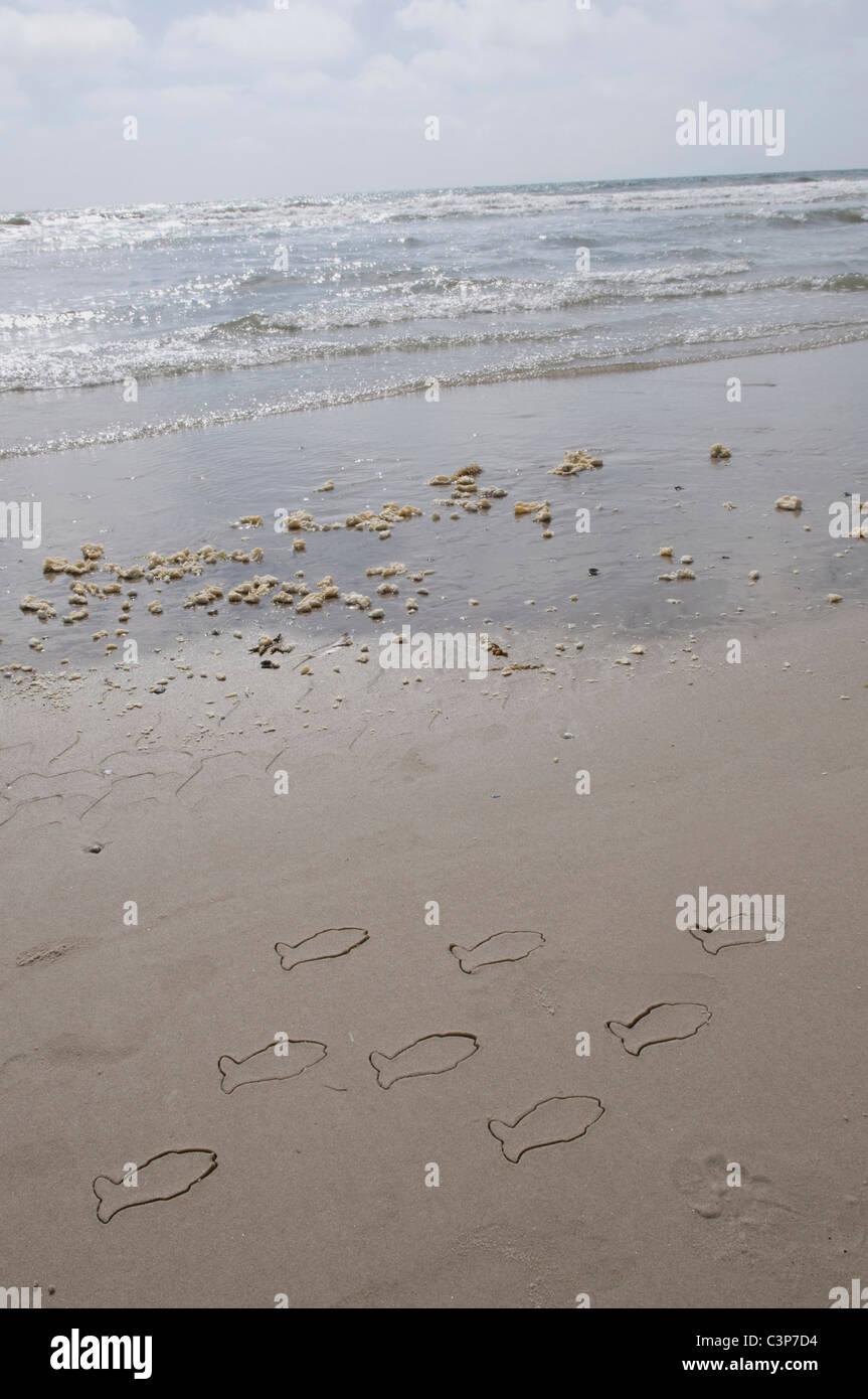 Deutschland, Schleswig-Holstein, Amrum, Fisch Zeichnungen am Sandstrand Stockbild