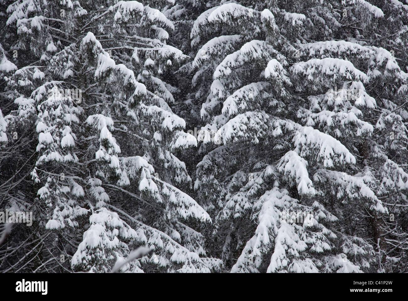 Verschneite Wälder, beschnitten, full frame Stockbild