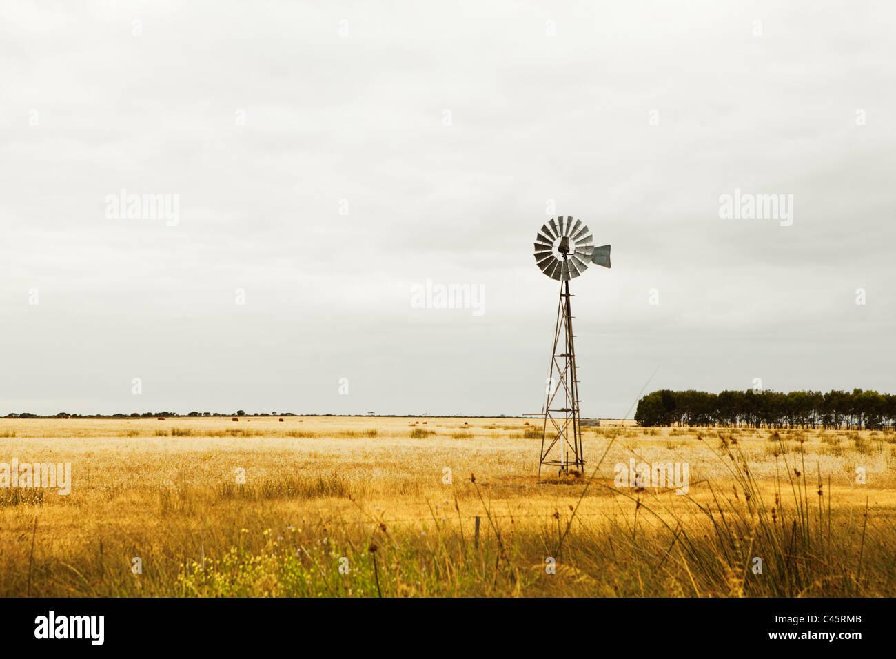 Windmühle auf Weiden in der Nähe von Esperance, Western Australia, Australien Stockbild