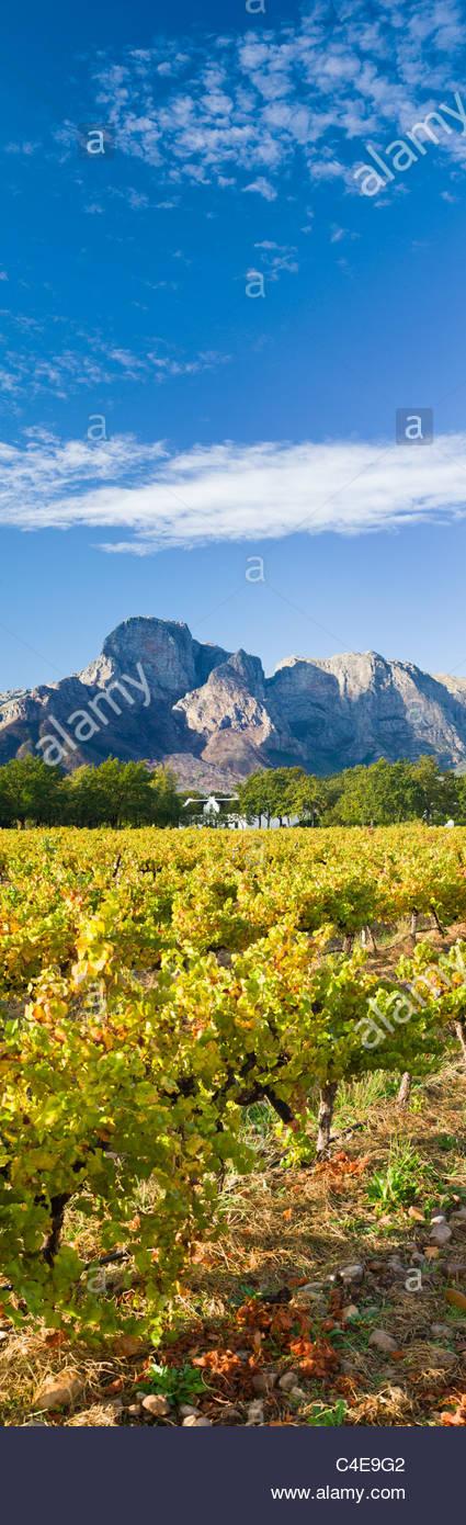 Boschendal Wine Estate am Fuße des Gebirges Groot Drakenstein, Südafrika Stockbild