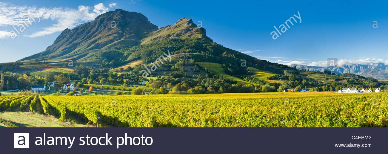 Der Berg des simonsberg Webstühle in den dem zorgvliet Weingut, in der Nähe von Stellenbosch, Südafrika. Stockbild