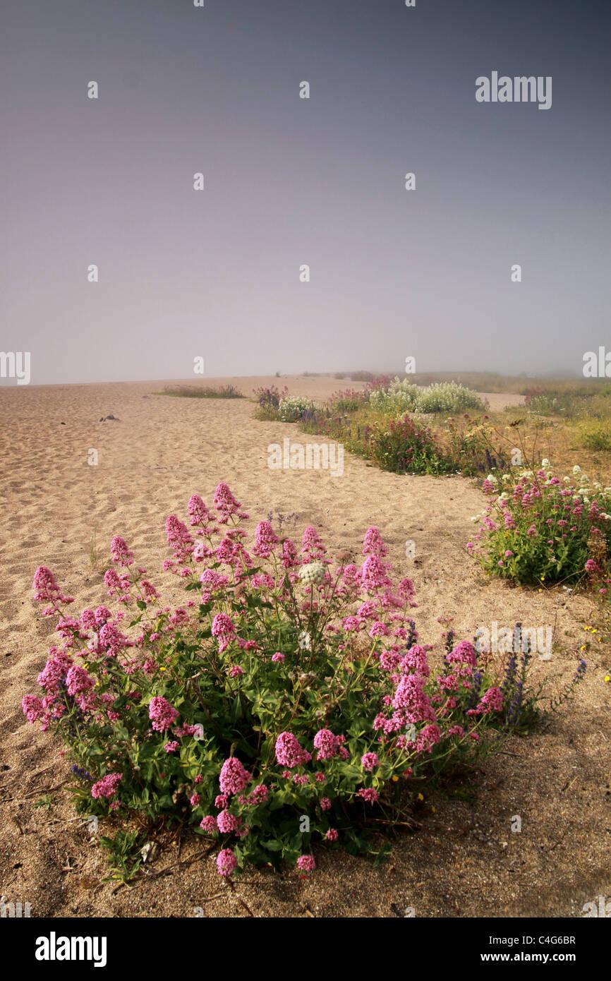 Blumen am Sandstrand Stockbild